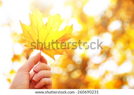 Beautiful autumn leaf in hand on sunny nature background - stock photo