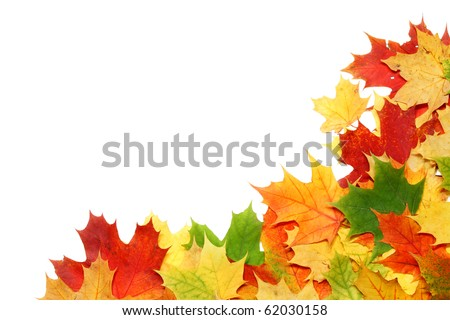 Beautiful autumn leafs isolated in white - stock photo