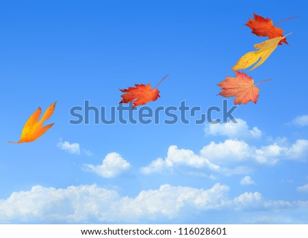 Beautiful autumn leaves carried on a breeze - stock photo