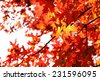 Beautiful autumn leaves, close-up - stock photo