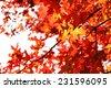 Beautiful autumn leaves, close-up - stock photo