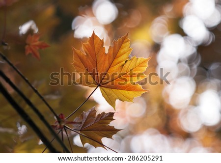 Beautiful Autumn leaves closeup in the forest - stock photo