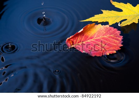 Beautiful autumn leaves fell into the water in the autumn rain - stock photo