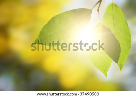 Beautiful autumn leaves in green solar wood - stock photo