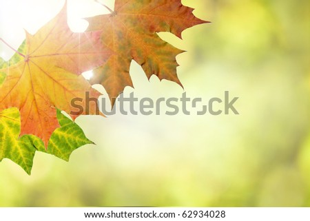 Beautiful autumn leaves on a sunny day with shallow depth of field - stock photo