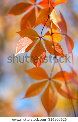 Beautiful Autumn leaves on defocused background - gentle colors of fall season - stock photo