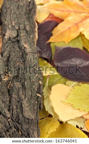 Beautiful autumn leaves with bark close up - stock photo
