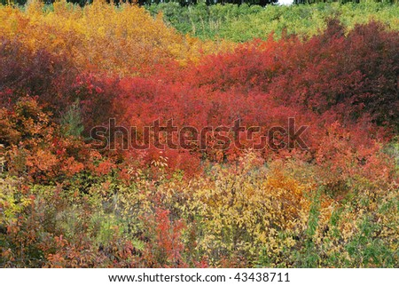 Beautiful autumn look of colorful bush in city edmonton downtown, alberta, canada - stock photo