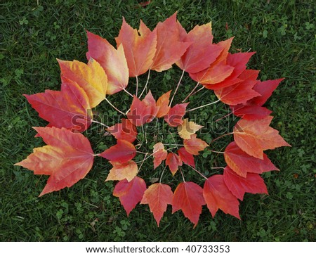 Beautiful autumn maple leaves arranged in a spiral - stock photo