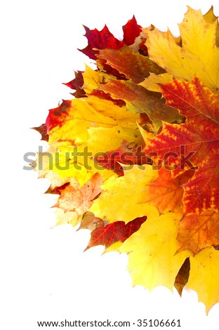 Beautiful autumn maple leaves, surface top view close up  over white