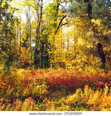 beautiful autumn mixed forest at sunny day - stock photo