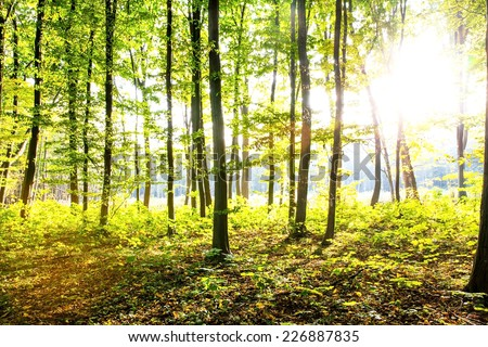 Beautiful autumn morning in the forest - stock photo