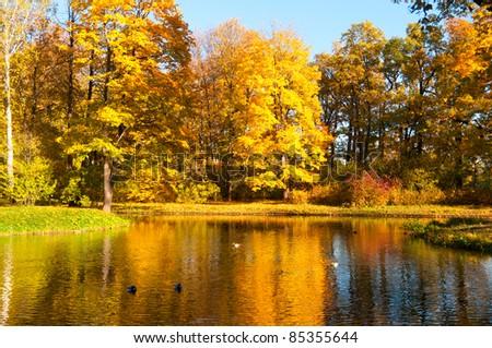 beautiful autumn park at sunny weather - stock photo