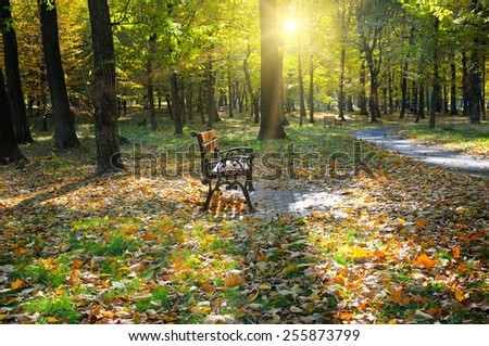 beautiful autumn park with paths and benches - stock photo