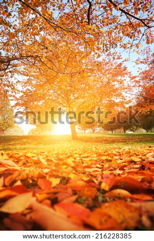 Beautiful autumn park with red and yellow leaves fallen from tree - stock photo
