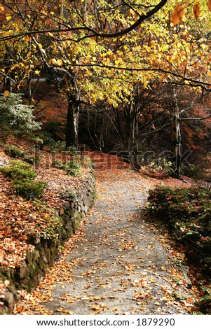 Beautiful autumn path covered in leaves