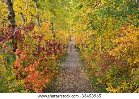 Beautiful autumn scene of a hiking trail in forest, north saskatchewan river valley, edmonton, alberta, canada - stock photo
