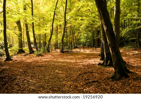 Beautiful autumn trail with bright orange leaves and trees