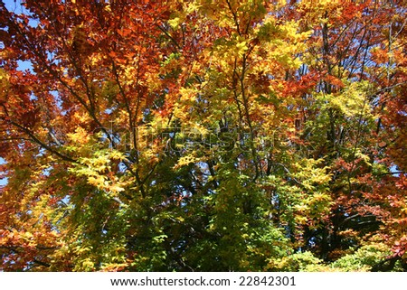 Beautiful autumn tree - stock photo