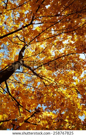 Beautiful autumn tree - stock photo