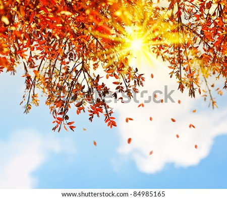 Beautiful autumn tree border with falling down old leaves over blue cloudy sky, abstract background, nature at fall