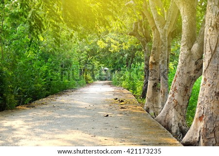 beautiful autumn tree way with sunlight nature morning green park background  - stock photo