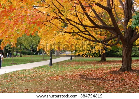 Beautiful autumn tree with golden leaves near a walking path