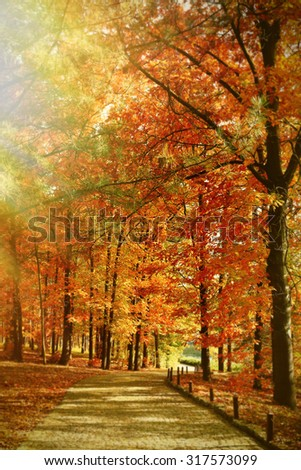 Beautiful autumn trees with sunlight in park - stock photo