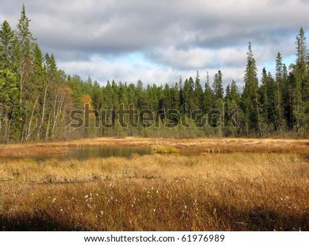 Beautiful autumn woodland scene - stock photo