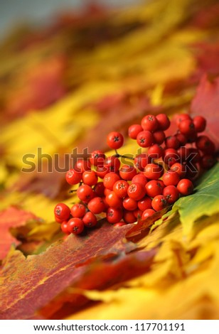 beautiful autumn yellow leaves background - stock photo