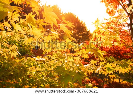 Beautiful autumnal background green and red foliage against the sun light - stock photo