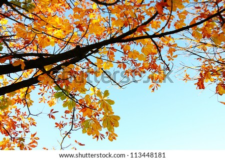 Beautiful autumnal leaves against blue sky