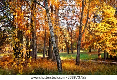 Beautiful autumnal meadow in forest at daylight. Bright colored fall day in the woods. Forest landscape at the end of autumn. The magic light of sun through the trees, fall scenery. - stock photo