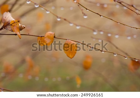 Beautiful autumnal natural background in pastel colors (shallow DoF) - stock photo