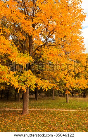 beautiful autumnal tree in park - stock photo