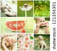 Beautiful baby and nature collage - stock photo