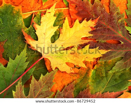 Beautiful backdrop of fallen autumn leaves for design - stock photo