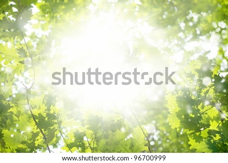 Beautiful background - green leaves of oak, bright sun - stock photo