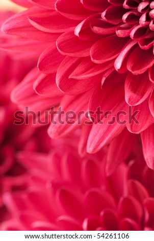 beautiful background of fresh flowers photographed in the studio - stock photo