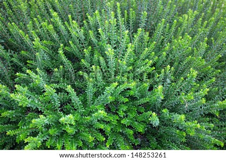 Beautiful background of fresh green plant in garden - stock photo