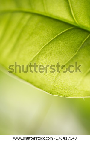 beautiful background of green plant leaf
