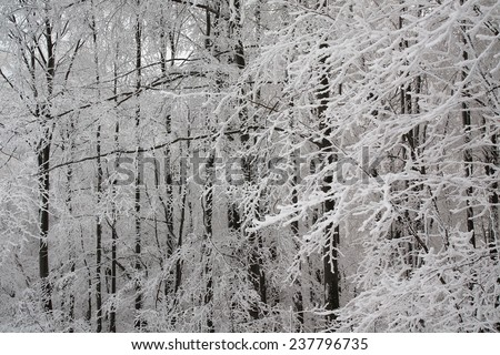 Beautiful background with frosted branches in winter forest - stock photo
