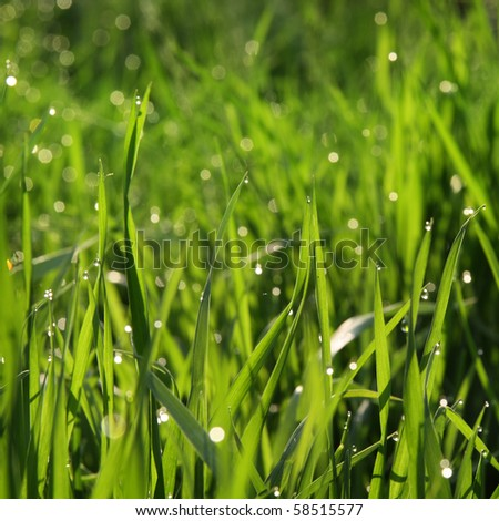 Beautiful background with green grass and droplets of dew