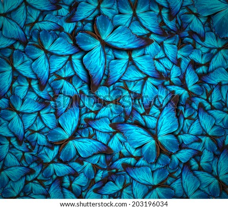 Beautiful background different butterflys stock photo 203196034 beautiful background different butterflys stock photo 203196034 shutterstock voltagebd Images