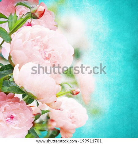 Beautiful background with peonies with vintage look/ romantic textured card with peony - stock photo