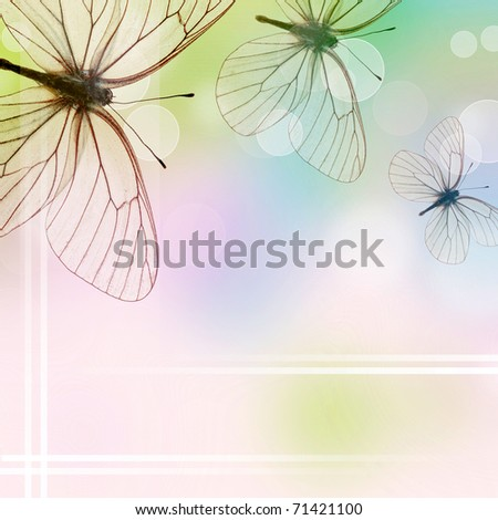 Beautiful  Background With Three Butterflies and bokeh (1 of set) - stock photo