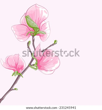 beautiful background with twig blossoming magnolia tree. Hand-drawn with effect of drawing in watercolor. Perfect for background greeting cards and invitations to the wedding, birthday - stock photo