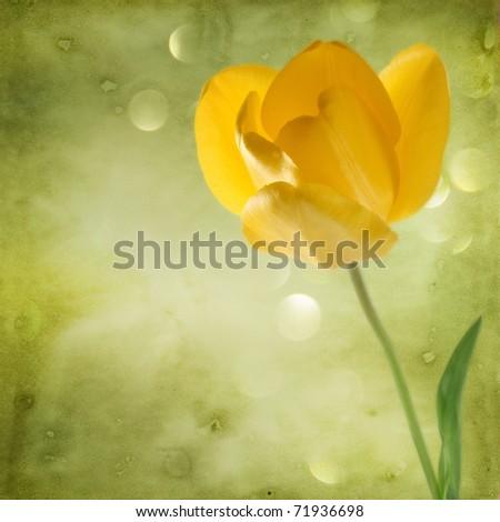 beautiful background with yellow tulip - stock photo