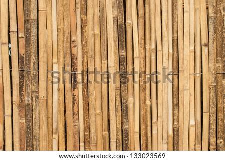 beautiful  bamboo background - stock photo