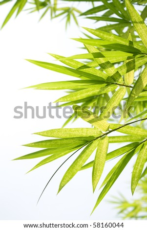Beautiful Bamboo Border - stock photo